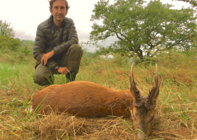 Corzos, caza en España