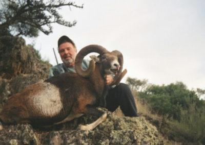 Muflon, caza en España