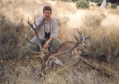 Venado, caza en España